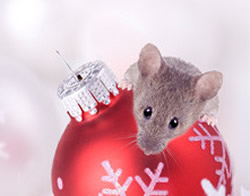 Pest Control Inspection CT Keep Unwanted Pests from Spoiling Your Holidays